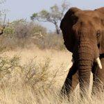 elephant-Kruger-Park