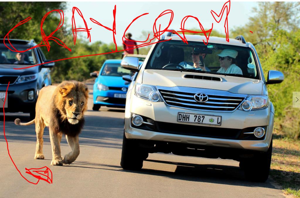 Crazy Kruger Lion