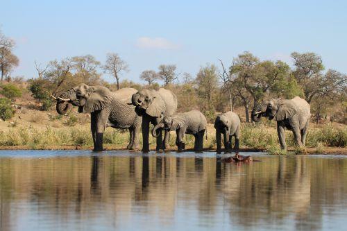 Elephants-S114-Kruger