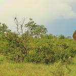 elephant rainbow Kruger