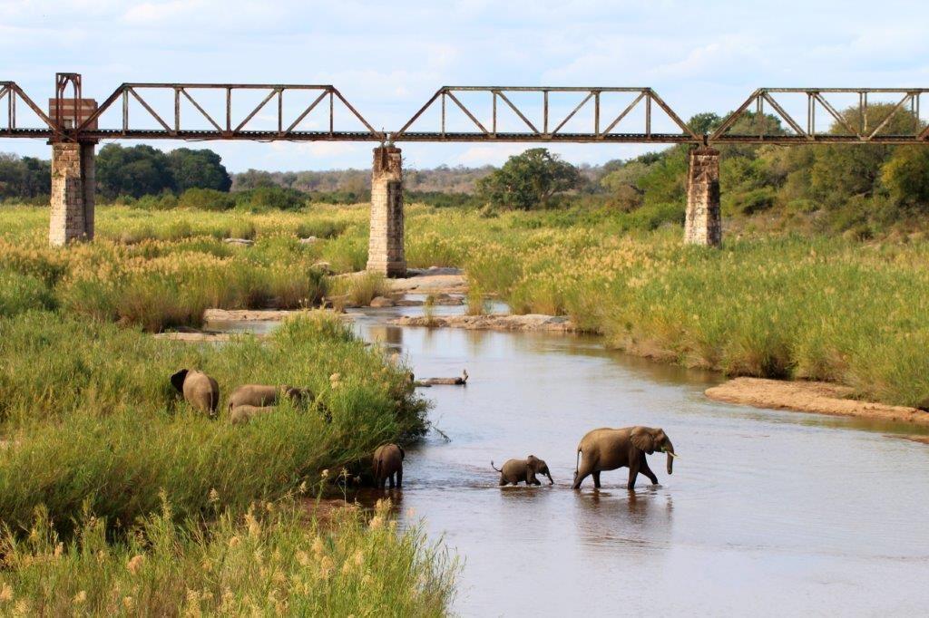 Elephants Skukuza River