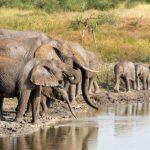 elephantsMadikwe