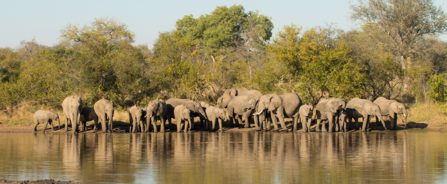 Timbavati Elephants