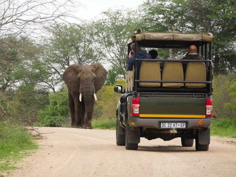 4 awesome safari trips that will change your life